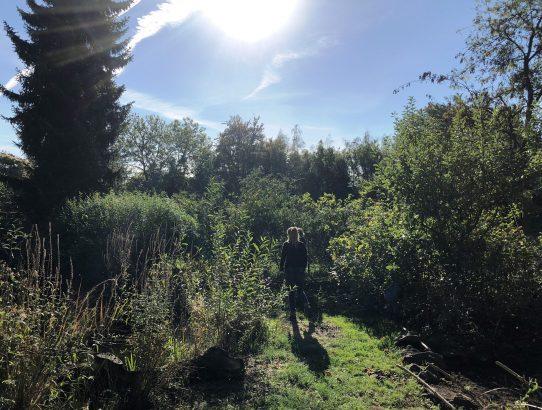 Gartentag am 6.10.2018